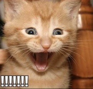 funny-pictures-kitten-is-excited-ab